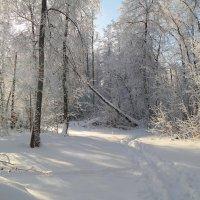 Про первый день нового года.. :: Андрей Заломленков