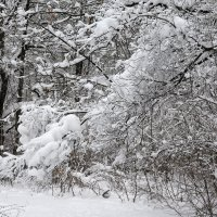 Зимняя графика :: Олег Манаенков
