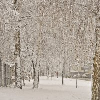 И падал снег ... :: Ольга Винницкая (Olenka)