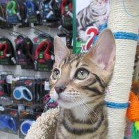 Котёнок . :: Зинаида