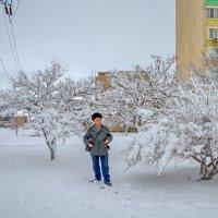 Прогулки по снегу :: Анатолий Чикчирный