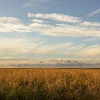 Поле и небо на закате. :: Alexandr Gunin