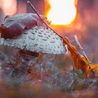 В огненном рассвете :: Роман Зайцев
