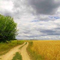 лето..дорога... :: юрий иванов