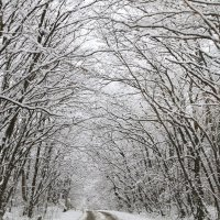 Зимняя сказка :: Геннадий Валеев