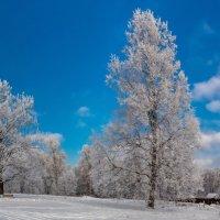зима во всей красе! :: юрий макаров