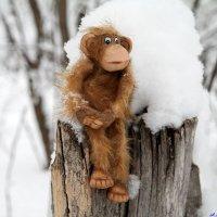 Холодно зимою маленькой макаке....:-) :: Андрей Заломленков