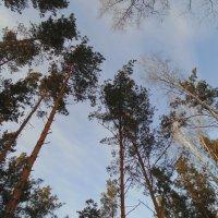 Гляжу я на небо ! :: Мила Бовкун