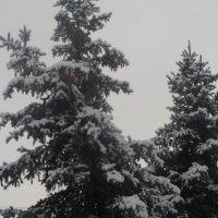 зима :: Lybov