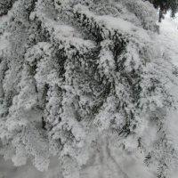 Много снега в начале января))) :: Алексей Кузнецов