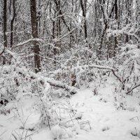 Когда много снега :: Сергей Тарабара