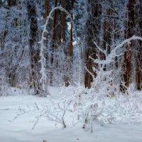 Из зимней сказки :: Laborant Григоров