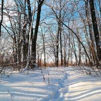 Однажды в студёную зимнюю пору я из лесу вышел.. :: Андрей Заломленков