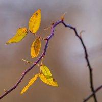 Осень :: DeART .