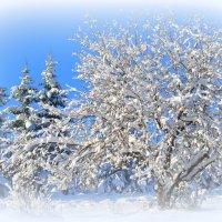 снежно-яблочное :: Антонина Мустонен