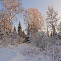 Сибирская тайга зимой прекрасна ! :: Нина северянка