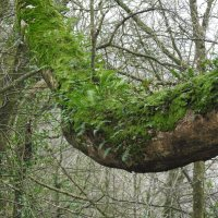 Ветка дерева :: Natalia Harries