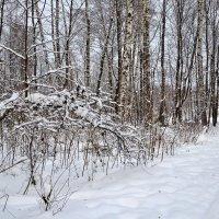 Под тяжестью снега :: Яша Баранов