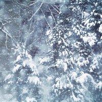 снег идет :: Лера