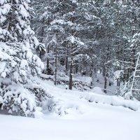 Зимний лес   IMG_1268 :: Олег Петрушин