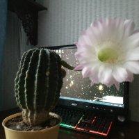 Мой кактус :: Дмитрий
