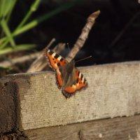 Бабочка :: Данил Матвеев