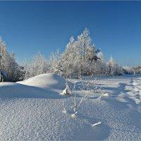 Морозный день :: Leonid Rutov