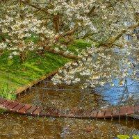 Весна :: Andrej V