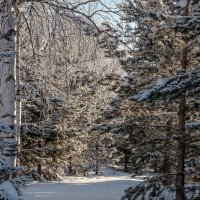 Зимний лес... :: Aquarius - Сергей