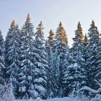 Рассвет в лесу :: Алексей Екимовских