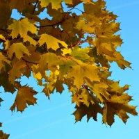 Краски октября... :: Михаил Болдырев