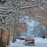 Зима :: Александр Довгий