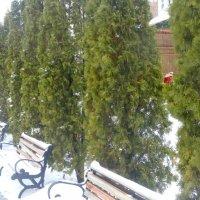 Зима в церковном дворе... :: Тамара (st.tamara)