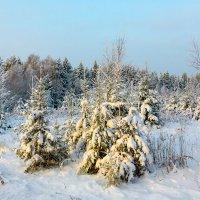И полон тайны зимний лес :: Александр Силинский