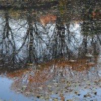 Листья опали, стволы обнажилисть.. :: Маргарита Батырева