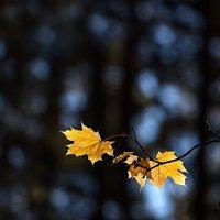 Осенний минимализм... :: Алексей Качурин
