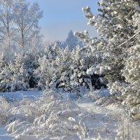 Морозный январь :: Владимир Звягин