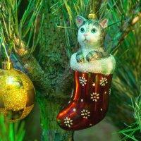 Кот в сапоге :: Aнна Зарубина