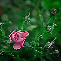 Flowers :: Марианна Привроцкая