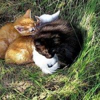 Котята :: Татьяна Беляева