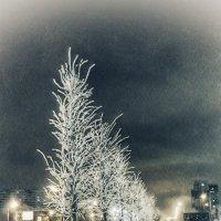 Зимнее утро :: Наташа Акимова