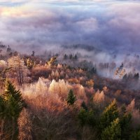 уходящие в туман :: Elena Wymann