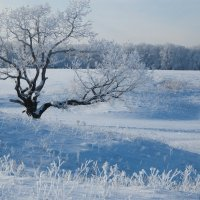 Морозный день :: Бобылев Геннадий