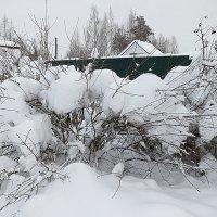 Под снежным покрывалом. :: Валентина Жукова