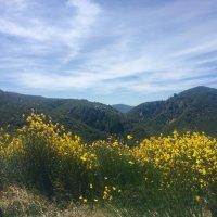 """""""Я обожаю желтые цветы. Им краски яркие дала природа"""" :: Ирэн"""