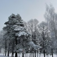Морозное утро :: Виталий Андрейчук