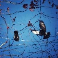 Голуби :: Птичка Э