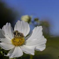 весна :: Александр Солуянов