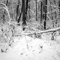 Снежно :: Сергей Тарабара