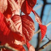 осенние листья зимой :: Роман Латышев